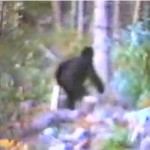 Video of Bigfoot Sighting Near Seattle