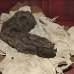 Mummified Giant Finger Found in Egypt