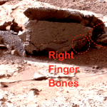 Astronomer Claims NASA Photo Shows Alien Fossil