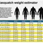 What Does a Bigfoot Weigh?