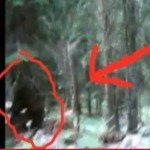 Slovenian Bigfoot Video