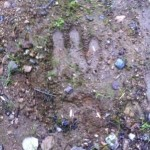 3 Toed Footprints Found in New Hampshire