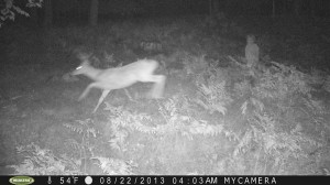 trail cam photo of ghost or humanoid