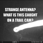 Hunter Catches Something Strange On His Trailcam