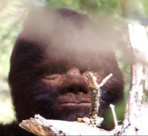 Review of the movie discovering bigfoot by todd standing can science prove that bigfoot exists bigfoot captured on film in the documentary discovering bigfoot sciox Images